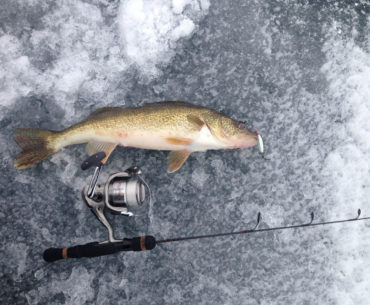 Jigging winter walleye